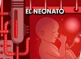 el-neonato