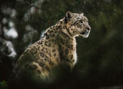 el-tesoro-del-jaguar