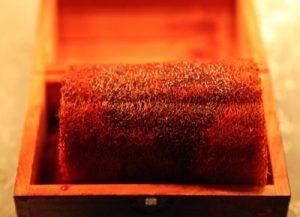 la-esponja-de-alejandro-magno